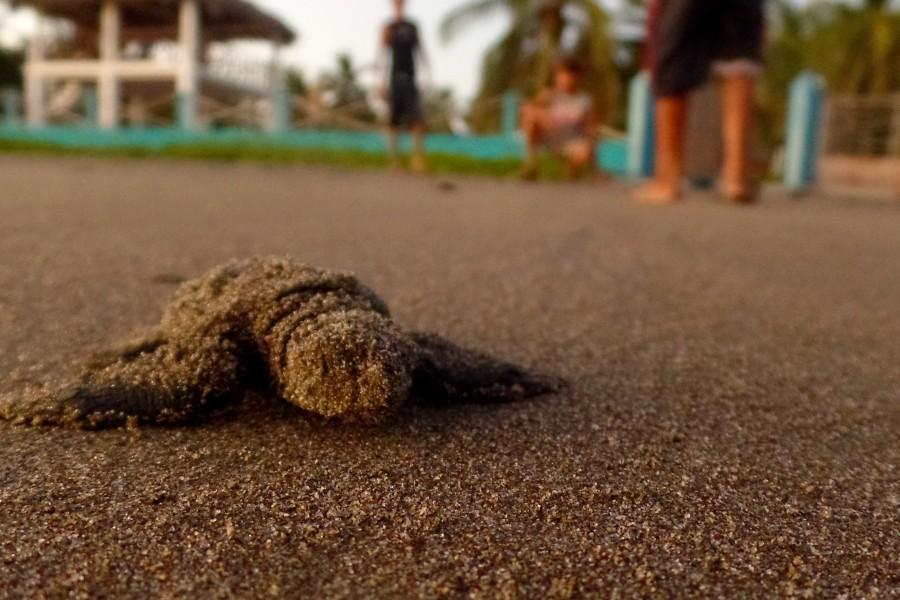 Sea Turtle Sanctuary in Playa El Cuco